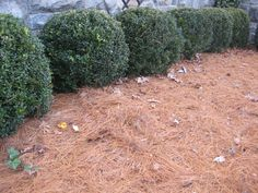 How to Mulch and Avoid Mistakes.  Good mulches/Types - Bad mulches/Types - Ugly mulches/Types