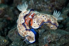 13 Best Underwater Photography from Miamis Contest 2013-- i just love a nudibranch