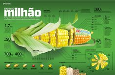 Diagram: Corn Infographic Infographic - Information Graphic Designs at Style & Flow