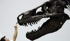 Fearsome Tyrannosaurus rex Sue may have died of a sore throat - The Guardian. Dinosaur enthusiasts are revising their image of the mighty Tyrannosaurus rex after discovering that the most famous specimen on public display was felled not in mortal combat, but by an infection that causes sore throats in pigeons.