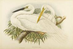 A white heron essay