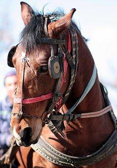 Лошадь, Браун, Pet, Лошадиный