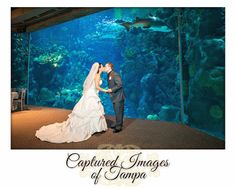 Wedding Portraits taken in the Coral Reef Room after their wedding ceremony at the Florida Aquarium - Captured Images Blog