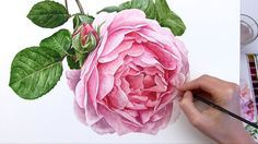 Roses can be daunting to paint! So many gorgeous petals, it's tricky to know where to start! Here I demystify the process of painting a larger-than life real...