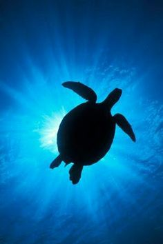 Love sea turtles.
