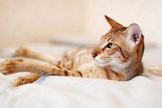 Czy musimy kupować legowisko dla kota?