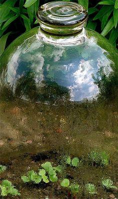 tiny seedlings under mini glass greenhouse