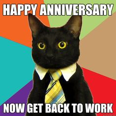 happy anniversary Now get back to work - happy anniversary Now get back to work  Business Cat