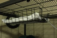 Hanging solutions for a little hammock for pet rats :D Man i wish we did this when I had my rats, Oreo and Snickers!!!