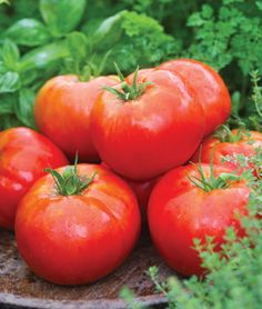 Tomato, Big Daddy Hybrid  Bred from the all-time great 'Big Boy' with improved disease resistance.
