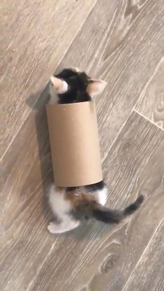 Cute Baby Cats, Funny Cute Cats, Cute Little Animals, Cute Cats And Kittens, Cute Funny Animals, Kittens Cutest, Cute Babies, Cute Animal Videos, Funny Animal Pictures