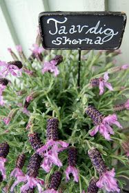 Lavender!- I would plant lavender all over my yard if I could...A beautiful, calming scent.