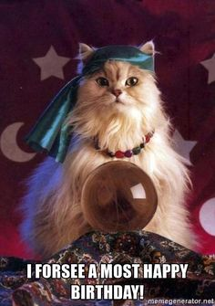 what do you see in the crystal ball? I Love Cats, Cute Cats, Funny Cats, Funny Animals, Cute Animals, Clever Animals, Happpy Birthday, Cat Birthday, Happy Birthday Cats