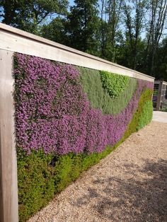 Wall of sedum (some in bloom!) at Grunsfeld Children's Garden at the Chicago Botanic Garden.