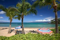 Napili Bay, Maui. Deep orange sunsets, spinner dolphins, trade winds, snorkeling in a tropical-fish wonderland.