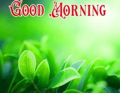Good Morning Picture, Good Morning Flowers, Good Night Image, Morning Pictures, Good Morning Images, Happy Akshaya Tritiya Images, Happy Diwali Images, Beautiful Flowers Images, Beautiful Places