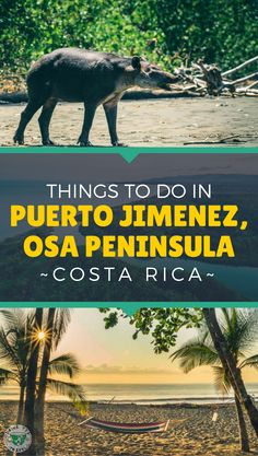 Planning a trip to Costa Rica? Don't miss Osa Peninsula - home to the most diverse National Park in the country. In this post, we share tips and advice about visiting Puerto Jimenez, the getaway to Corcovado National Park with lots of things to do and activities to take part in.