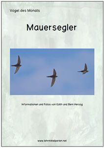 FREE: Vogel des Monats: der Mauersegler