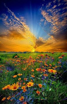 """Fantastic landscape photograph of a field of daisies at sunrise in Wisconsin, entitled """"Daisy Dream"""" by Phil Koch on Captured with a Canon EOS Focal Length Shutter Speed Aperture ISO/Film flowers All Nature, Amazing Nature, Nature Tree, Beautiful World, Beautiful Places, Beautiful Sunset, Beautiful Flowers, Beautiful Beautiful, Landscape Photography"""