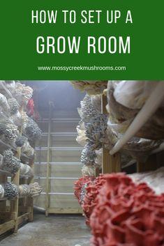 A quality grow room setup produces high-quality mushrooms. Grow Your Own Mushrooms, Growing Mushrooms At Home, Garden Mushrooms, Edible Mushrooms, Wild Mushrooms, Stuffed Mushrooms, Mushroom Compost, Mushroom Grow Kit, Mushroom Spores