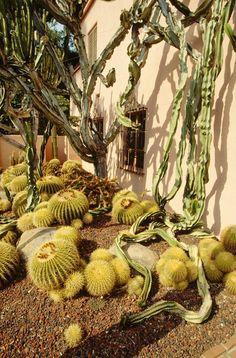 beautiful cacti garden.