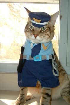 he looks the part too in his cat costume http://catsrpeople2.com/