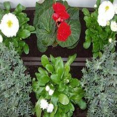 herbs for crohn's disease