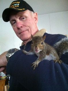 Eastern Gray Squirrel   Cox Zoo   Baby Squirrel Diet