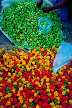 sorting peppers in Central Market, Port of Spain, Trinidad and Tobago. My favorite ingredient! Island Food, Island Life, Trinidadian Recipes, Caribbean Recipes, Caribbean Food, Trini Food, Port Of Spain, Caribbean Culture, West Indian