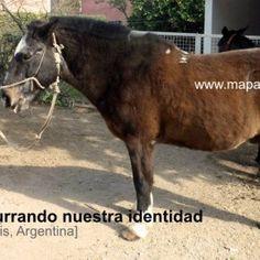 Don Chelo: Una historia susurrando nuestra identidad [Villa de Merlo, San Luis, Argentina]