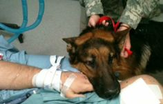 Foreign Policy :: Rebecca's War Dog of the Week: Army corporal and JaJo survive IED blast together