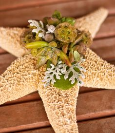 Starfish with succulents for beach wedding Our Wedding, Dream Wedding, Wedding Ideas, Perfect Wedding, Beach Bridal Showers, Beach Wedding Flowers, Tiffany Wedding, Beach Wedding Inspiration, Corsage Wedding