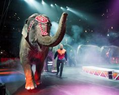 Enter to WIN Tickets to the Ringling and Barnum and Bailey Circus #ad