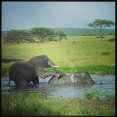 Keeping Cool. Follow our African Safari on Facebook!  #AfricanSafari #RLESafari #Sweepstakes #FreeSunglasses #FreeBinoculars