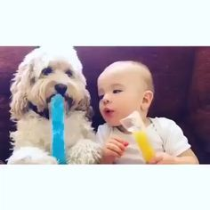 A little boy and his best friend sharing an ice pop. Any dogs and puppies that are cute. See more ideas about Cute Dogs, Cute puppies Tags: Tiny Puppies, Cute Puppies, Cute Dogs, Cute Babies, Puppies Tips, Funny Babies, Dogs And Kids, Animals For Kids, Funny Animal Videos