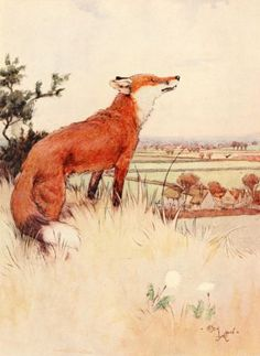 """Fox. """"White Ear and Peter"""" by Cecil Aldin"""
