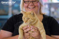 Cat Adoptions | Renbury Farm