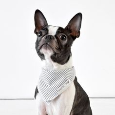 New from Doca Pet: Toys and Bandanas