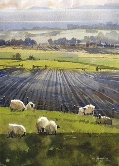 Fife Sheep by Iain Stewart Watercolor ~ 14 x 10