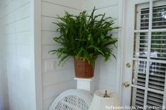 Kimberly Queen: The Shed-free Fern: Non-toxic to animals, good for indoor growing.