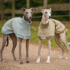 Our Wool Dog Coat is the ultimate in luxury for your hound. Made from panels that are machine knitted for us in Scotland using a soft Italian lambswool, then cut and sewn by our expert ladies to fit your hounds body, it easily slips gently over the head, and fastens with a stylish strap and D