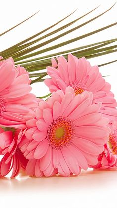 Gerbera Daisies Wallpaper for desktop mobile high resolution HD