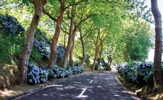 This is Sao Miguel, Azores the place I come from...