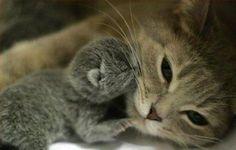Awwww Kissies :))