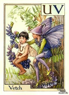 """Vintage print 'Vetch' by Cicely Mary Barker from """"A Flower Fairy Alphabet""""; Poems and Pictures by Cicely Mary Barker, Published by Blackie & Son Limited, London Cicely Mary Barker, Illustration Noel, Fantasy Illustration, Illustration Flower, Flower Fairies, Fairy Land, Fairy Tales, Grandes Photos, Fairy Pictures"""