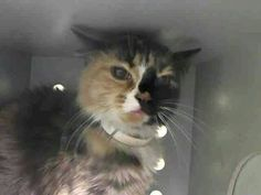 Please save Mish doomed to die today at ACC shelter in New York City URGENT visit pets on death row on Facebook