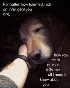 QUOTE, Animals:  'No matter how talented, rich, or intelligent you are, how you treat animals tells me all I need to know about you.'