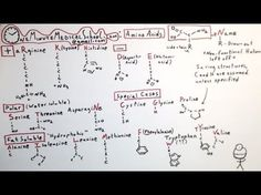 Great Way To Learn Amino Acid Structures Even Scientists Can Be