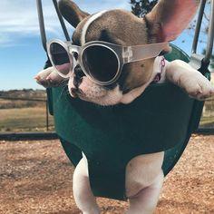 Hello Dear Weekend • • • • • • • • • • #frenchbulldog #frenchbulldogpuppies #frenchbulldogs #frenchbulldogsofinstagram #frenchiestagram #dog #frenchies #dogs #dogstagram #dogsofinstagram #pups #pupsofinstagram #puppylove #puppies #bulldog #bulldogpuppy #pet #pets #petstagram #daily_frenchie #petsofinstagram #frenchie #cutepuppy #cuteanimals #ilovemydog #ilovedogs #doglover #bulldoglove #instadogs #frenchbulldogsofig
