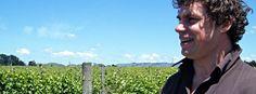 Junction Wine Wineries, Vineyard, Tours, Nature, Wine Cellars, Naturaleza, Vine Yard, Vineyard Vines, Nature Illustration